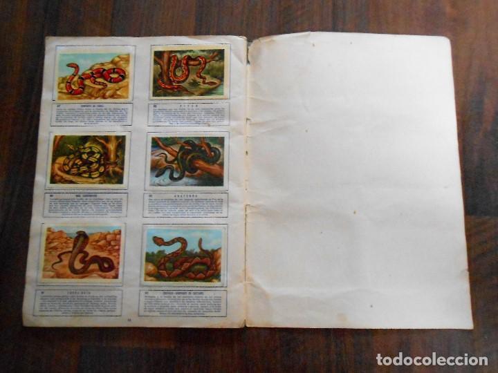 Coleccionismo Álbum: ALBUM DE CROMOS ZOOLOGIA COMPLETO FERCA 1961 ALBUN alfreedom ANIMALES ESTAMPAS CARDS CROMO - Foto 18 - 142054698