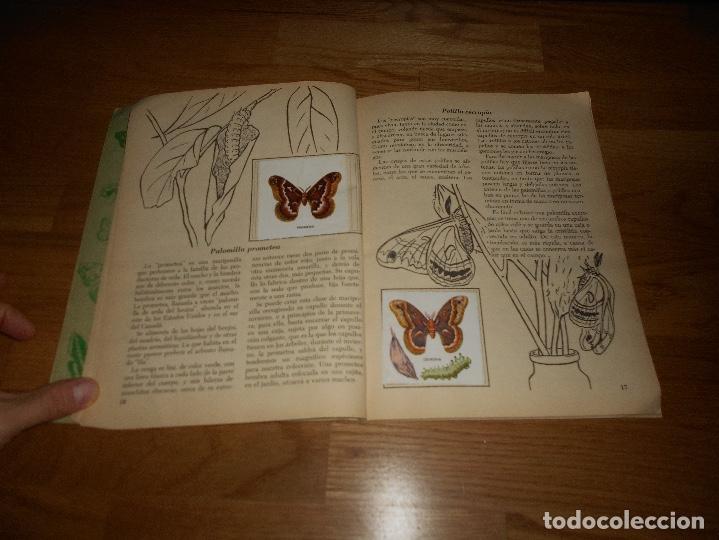 Coleccionismo Álbum: Álbum de Cromos Completo / Nuevo - Vida de los Insectos - Un Libro de Oro Estampas - Nº 10 - Novaro - Foto 3 - 142856798