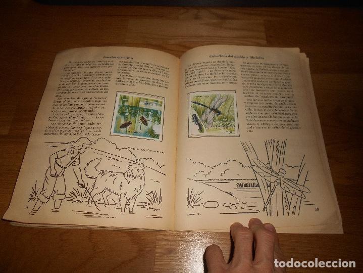 Coleccionismo Álbum: Álbum de Cromos Completo / Nuevo - Vida de los Insectos - Un Libro de Oro Estampas - Nº 10 - Novaro - Foto 4 - 142856798