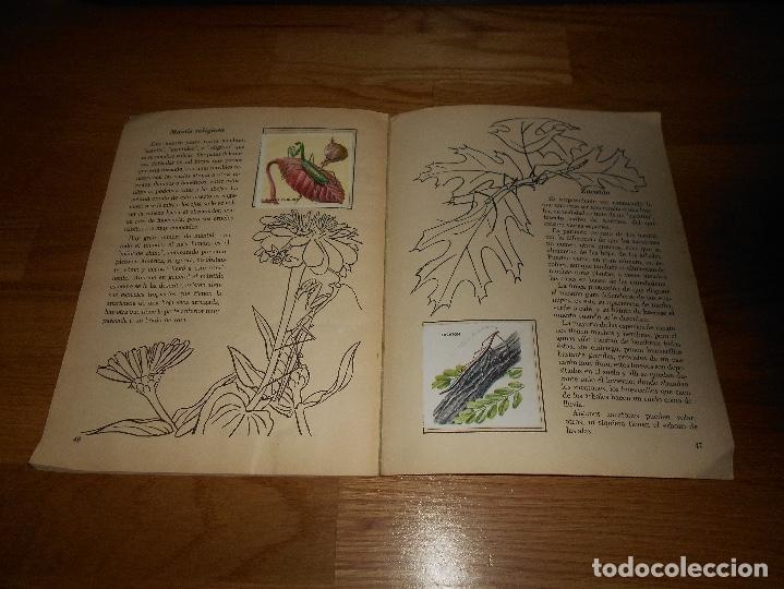 Coleccionismo Álbum: Álbum de Cromos Completo / Nuevo - Vida de los Insectos - Un Libro de Oro Estampas - Nº 10 - Novaro - Foto 5 - 142856798