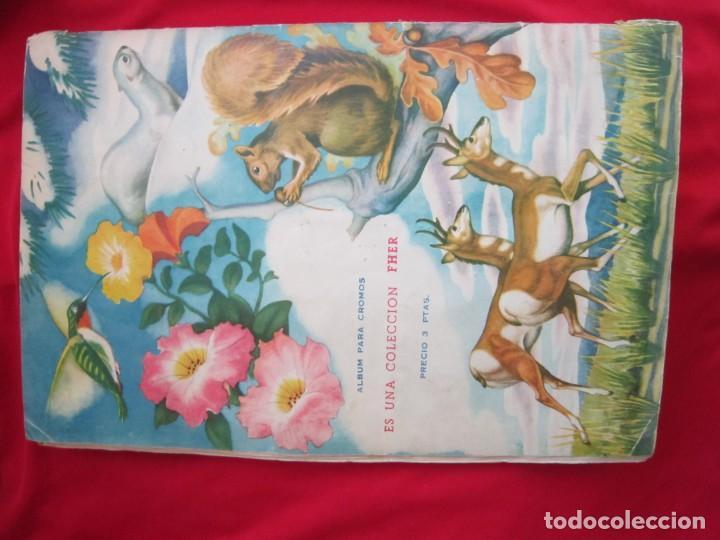 Coleccionismo Álbum: ALBUM SEMI COMPLETO ANIMALES DE TODO EL MUNDO. EDITORIAL FHER. AÑOS 50. FALTAN 17 CROMOS (DE 300) - Foto 2 - 146656606