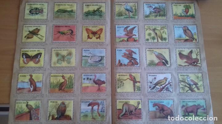 Coleccionismo Álbum: ALBUM DEL REINO ANIMAL EDICIONES COSTA GIGARPE MURCIA COMPLETO EN BUEN ESTADO - Foto 3 - 155240470