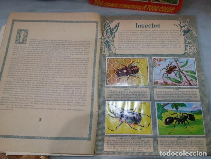 Coleccionismo Álbum: Album de cromos HISTORIA NATURAL. AÑOS 60- 70. COMPLETO. DOS UNIDADES - Foto 4 - 164487950