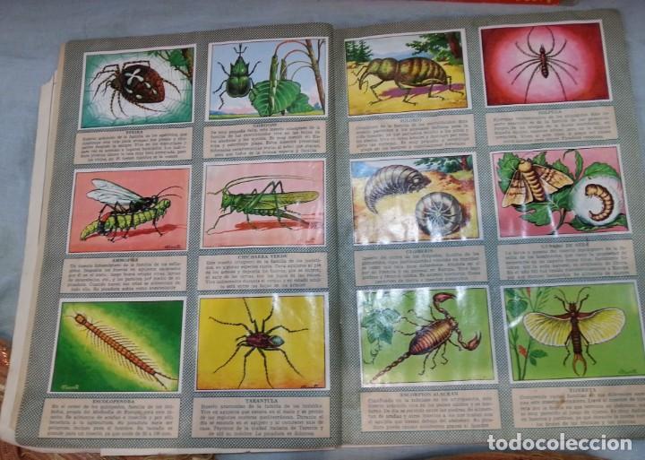 Coleccionismo Álbum: Album de cromos HISTORIA NATURAL. AÑOS 60- 70. COMPLETO. DOS UNIDADES - Foto 5 - 164487950