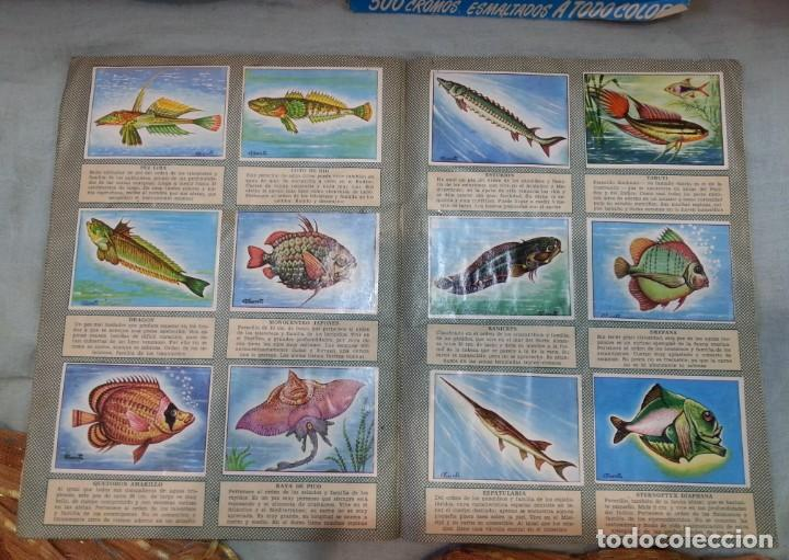 Coleccionismo Álbum: Album de cromos HISTORIA NATURAL. AÑOS 60- 70. COMPLETO. DOS UNIDADES - Foto 19 - 164487950