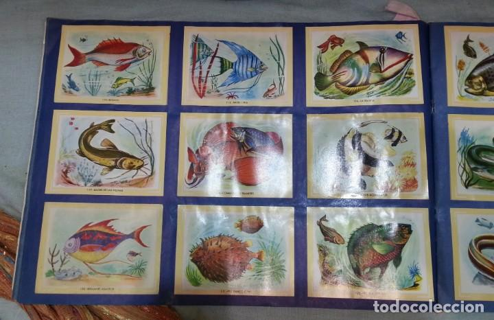 Coleccionismo Álbum: Album de cromos NATURAMA. AÑOS 60- 70. COMPLETO. - Foto 7 - 165057094