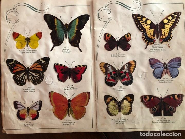 Coleccionismo Álbum: Las Cien Mariposas más bellas del mundo . Panrico1974 - Foto 3 - 173873370