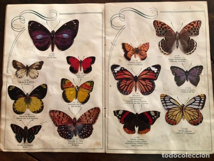 Coleccionismo Álbum: Las Cien Mariposas más bellas del mundo . Panrico1974 - Foto 4 - 173873370