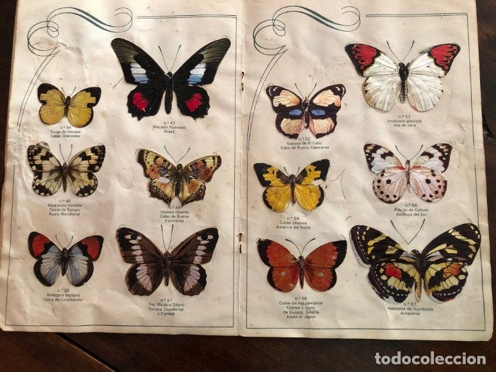 Coleccionismo Álbum: Las Cien Mariposas más bellas del mundo . Panrico1974 - Foto 5 - 173873370