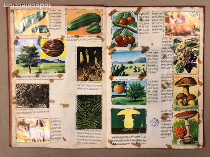 Coleccionismo Álbum: ÁLBUM ENCICLOPÉDICO DISGRA-FHER (1965). ÁLBUM DE CROMOS COMPLETO. - Foto 8 - 190481140