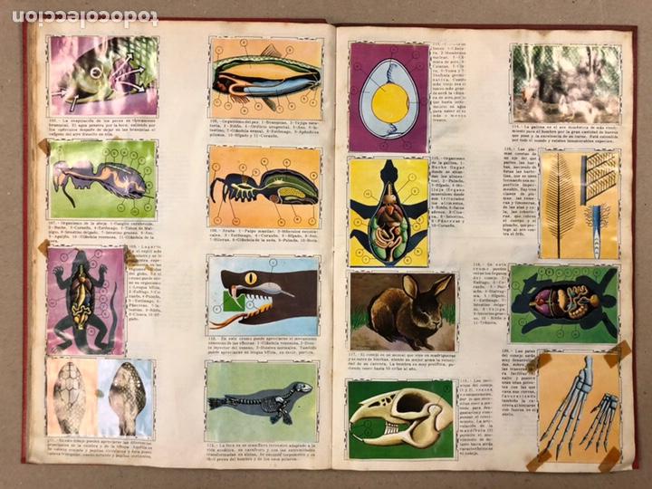 Coleccionismo Álbum: ÁLBUM ENCICLOPÉDICO DISGRA-FHER (1965). ÁLBUM DE CROMOS COMPLETO. - Foto 11 - 190481140