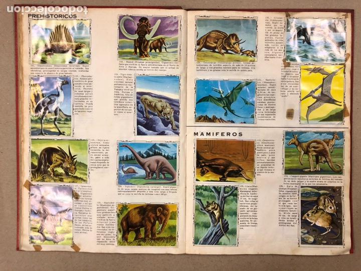 Coleccionismo Álbum: ÁLBUM ENCICLOPÉDICO DISGRA-FHER (1965). ÁLBUM DE CROMOS COMPLETO. - Foto 12 - 190481140