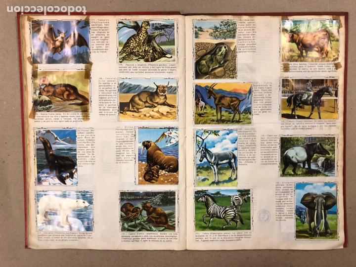 Coleccionismo Álbum: ÁLBUM ENCICLOPÉDICO DISGRA-FHER (1965). ÁLBUM DE CROMOS COMPLETO. - Foto 13 - 190481140
