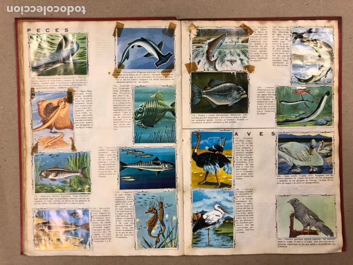 Coleccionismo Álbum: ÁLBUM ENCICLOPÉDICO DISGRA-FHER (1965). ÁLBUM DE CROMOS COMPLETO. - Foto 15 - 190481140