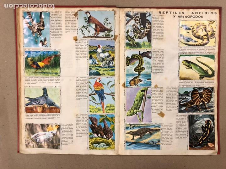 Coleccionismo Álbum: ÁLBUM ENCICLOPÉDICO DISGRA-FHER (1965). ÁLBUM DE CROMOS COMPLETO. - Foto 16 - 190481140