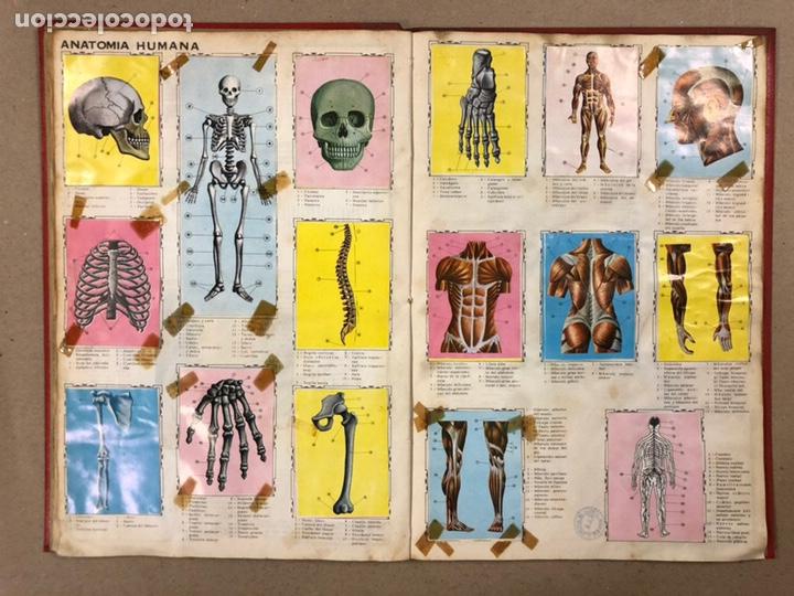 Coleccionismo Álbum: ÁLBUM ENCICLOPÉDICO DISGRA-FHER (1965). ÁLBUM DE CROMOS COMPLETO. - Foto 18 - 190481140