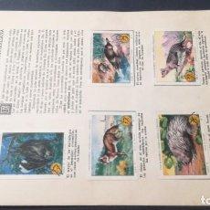 Coleccionismo Álbum: 18 FAUNA TERRESTRE AUSTRALIANASELLOS AHORRO INFANTIL CAJA AHORROS ZARAGOZA COMPLETO SELLADOCP B-1. Lote 195324353