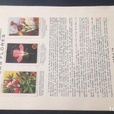 Coleccionismo Álbum: 14 LAS FLORESSELLOS AHORRO INFANTIL CAJA AHORROS ZARAGOZA COMPLETO SELLADOCP B-1. Lote 195325206