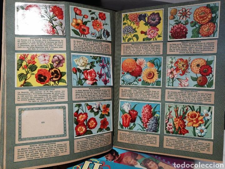 Coleccionismo Álbum: Historia Natural Albumes Primero y Segundo. Editorial Bruguera - Foto 2 - 197564698