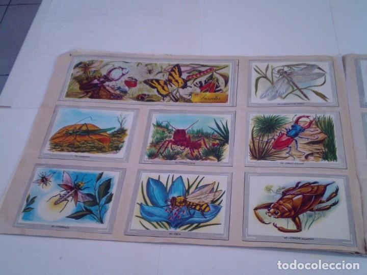 Coleccionismo Álbum: VIDA Y COLOR - ALBUM DE CROMOS - ALBUMES ESPAÑOLES, SA - COMPLETO - BUEN ESTADO - GORBAUD - Foto 10 - 203384722