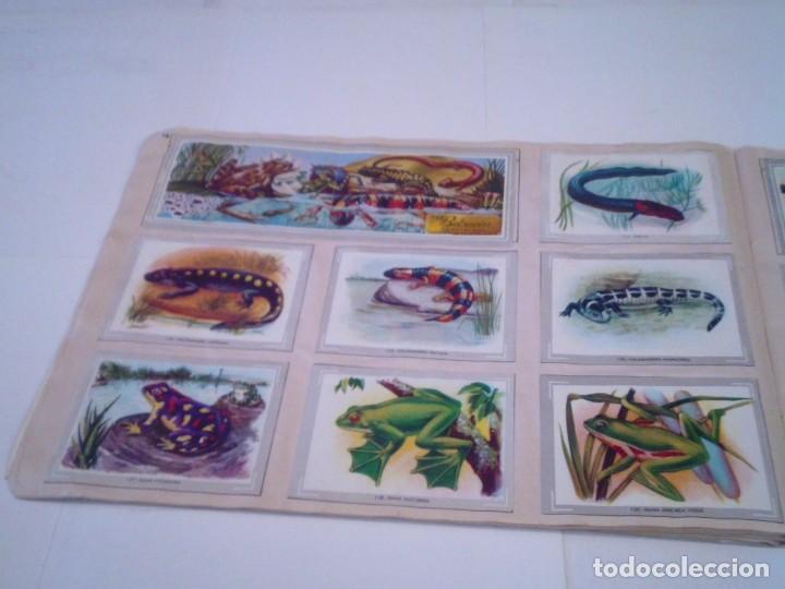 Coleccionismo Álbum: VIDA Y COLOR - ALBUM DE CROMOS - ALBUMES ESPAÑOLES, SA - COMPLETO - BUEN ESTADO - GORBAUD - Foto 18 - 203384722