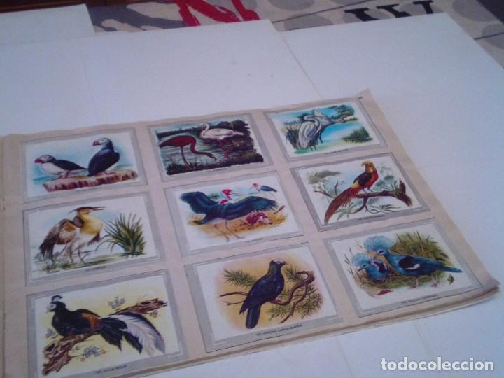 Coleccionismo Álbum: VIDA Y COLOR - ALBUM DE CROMOS - ALBUMES ESPAÑOLES, SA - COMPLETO - BUEN ESTADO - GORBAUD - Foto 23 - 203384722