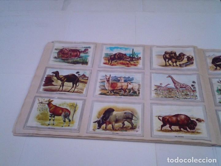 Coleccionismo Álbum: VIDA Y COLOR - ALBUM DE CROMOS - ALBUMES ESPAÑOLES, SA - COMPLETO - BUEN ESTADO - GORBAUD - Foto 34 - 203384722