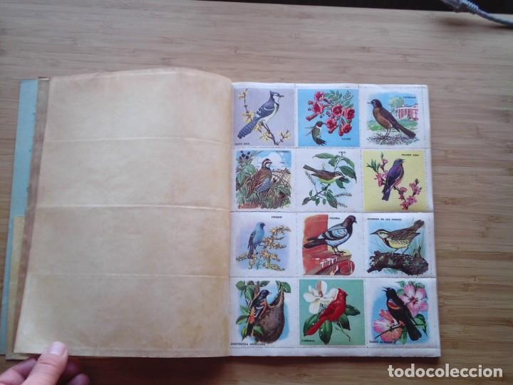 Coleccionismo Álbum: GALERIA DE PAJAROS - LIBRO DE ORO DE ESTAMPAS - NUMERO 2 - COMPLETO - BUEN ESTADO - NOVARO - GORBAUD - Foto 4 - 205047378