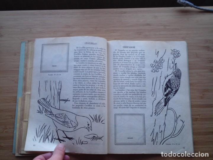 Coleccionismo Álbum: GALERIA DE PAJAROS - LIBRO DE ORO DE ESTAMPAS - NUMERO 2 - COMPLETO - BUEN ESTADO - NOVARO - GORBAUD - Foto 10 - 205047378