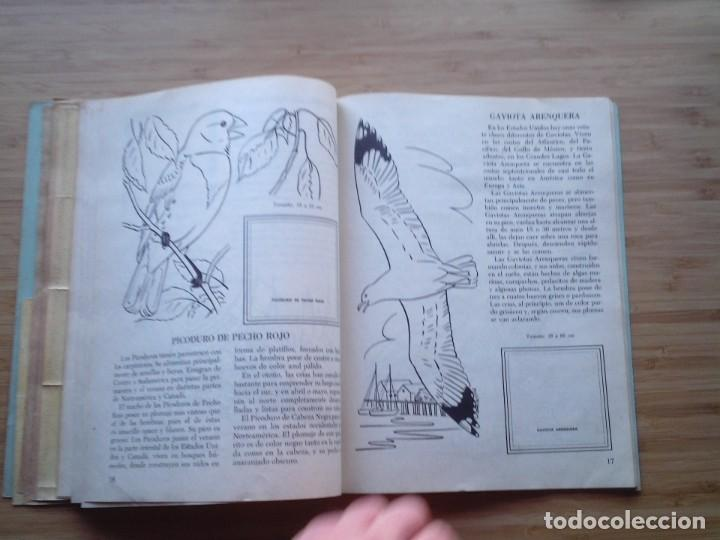 Coleccionismo Álbum: GALERIA DE PAJAROS - LIBRO DE ORO DE ESTAMPAS - NUMERO 2 - COMPLETO - BUEN ESTADO - NOVARO - GORBAUD - Foto 13 - 205047378