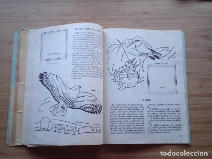 Coleccionismo Álbum: GALERIA DE PAJAROS - LIBRO DE ORO DE ESTAMPAS - NUMERO 2 - COMPLETO - BUEN ESTADO - NOVARO - GORBAUD - Foto 14 - 205047378