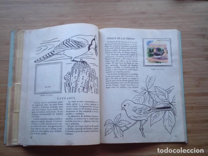 Coleccionismo Álbum: GALERIA DE PAJAROS - LIBRO DE ORO DE ESTAMPAS - NUMERO 2 - COMPLETO - BUEN ESTADO - NOVARO - GORBAUD - Foto 15 - 205047378