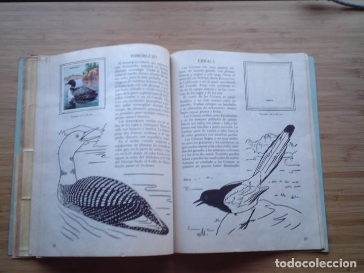 Coleccionismo Álbum: GALERIA DE PAJAROS - LIBRO DE ORO DE ESTAMPAS - NUMERO 2 - COMPLETO - BUEN ESTADO - NOVARO - GORBAUD - Foto 17 - 205047378