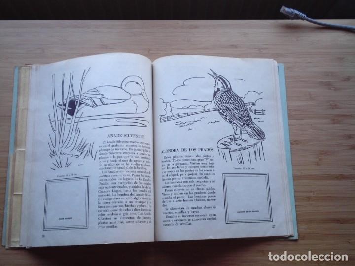Coleccionismo Álbum: GALERIA DE PAJAROS - LIBRO DE ORO DE ESTAMPAS - NUMERO 2 - COMPLETO - BUEN ESTADO - NOVARO - GORBAUD - Foto 18 - 205047378