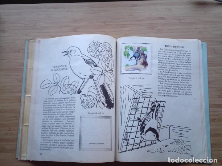 Coleccionismo Álbum: GALERIA DE PAJAROS - LIBRO DE ORO DE ESTAMPAS - NUMERO 2 - COMPLETO - BUEN ESTADO - NOVARO - GORBAUD - Foto 19 - 205047378