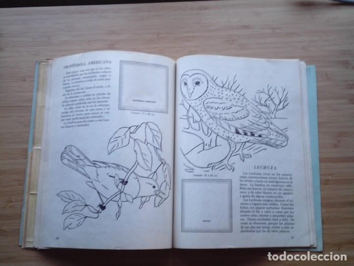 Coleccionismo Álbum: GALERIA DE PAJAROS - LIBRO DE ORO DE ESTAMPAS - NUMERO 2 - COMPLETO - BUEN ESTADO - NOVARO - GORBAUD - Foto 20 - 205047378