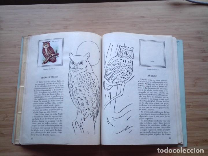 Coleccionismo Álbum: GALERIA DE PAJAROS - LIBRO DE ORO DE ESTAMPAS - NUMERO 2 - COMPLETO - BUEN ESTADO - NOVARO - GORBAUD - Foto 21 - 205047378