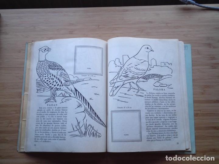 Coleccionismo Álbum: GALERIA DE PAJAROS - LIBRO DE ORO DE ESTAMPAS - NUMERO 2 - COMPLETO - BUEN ESTADO - NOVARO - GORBAUD - Foto 22 - 205047378