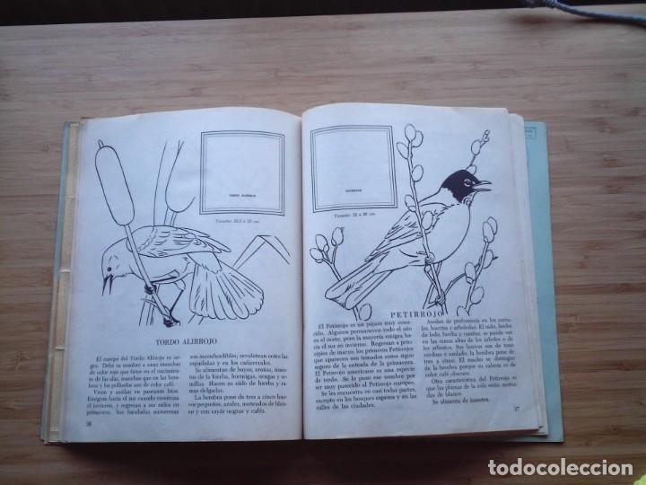 Coleccionismo Álbum: GALERIA DE PAJAROS - LIBRO DE ORO DE ESTAMPAS - NUMERO 2 - COMPLETO - BUEN ESTADO - NOVARO - GORBAUD - Foto 23 - 205047378