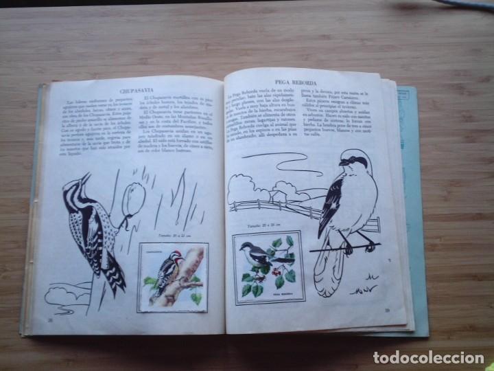 Coleccionismo Álbum: GALERIA DE PAJAROS - LIBRO DE ORO DE ESTAMPAS - NUMERO 2 - COMPLETO - BUEN ESTADO - NOVARO - GORBAUD - Foto 24 - 205047378