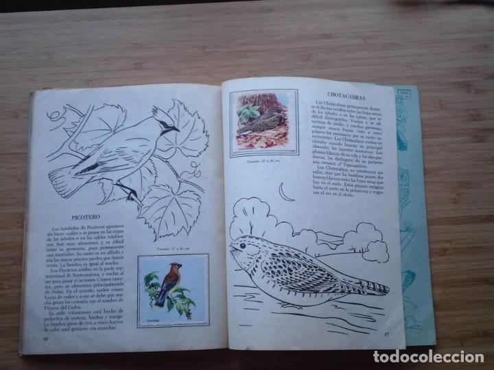 Coleccionismo Álbum: GALERIA DE PAJAROS - LIBRO DE ORO DE ESTAMPAS - NUMERO 2 - COMPLETO - BUEN ESTADO - NOVARO - GORBAUD - Foto 28 - 205047378