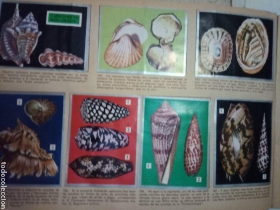 Coleccionismo Álbum: Álbum Maga, Valencia 1969 Zoológia y Botánica - Foto 2 - 210061233