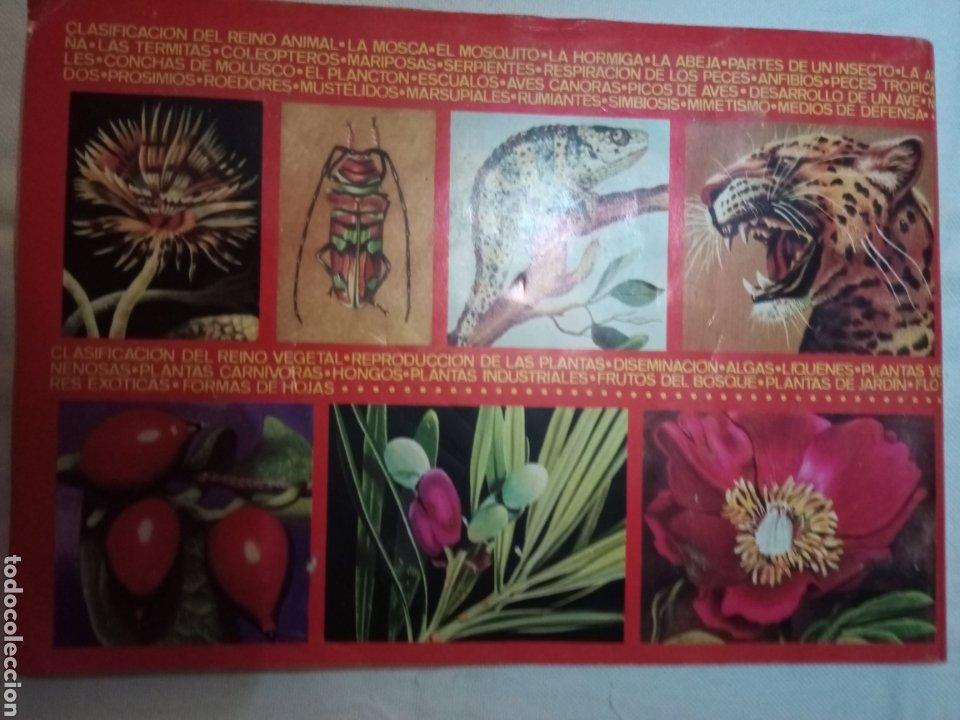Coleccionismo Álbum: Álbum Maga, Valencia 1969 Zoológia y Botánica - Foto 3 - 210061233