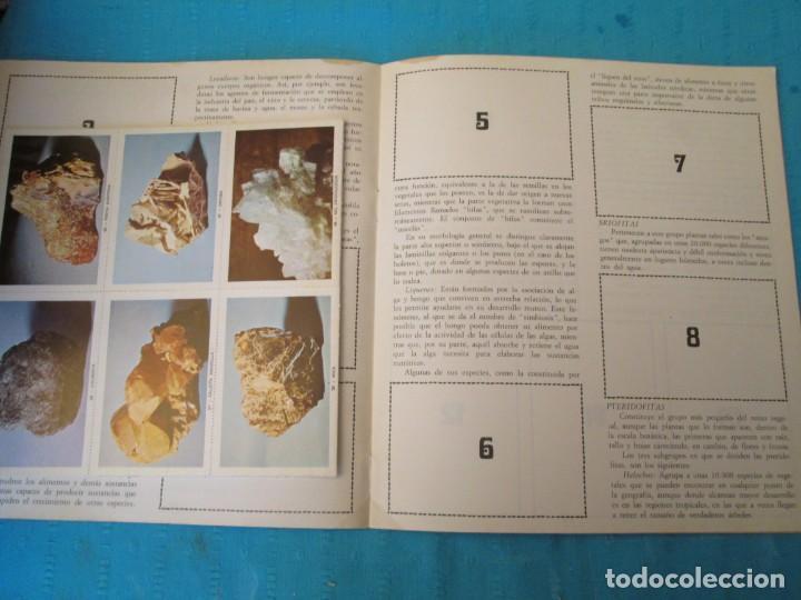 Coleccionismo Álbum: PLANTAS Y MINERALES FHER - Foto 2 - 210363535