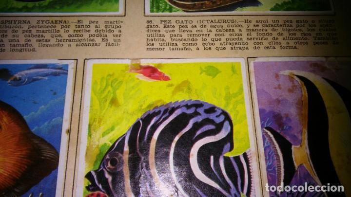 Coleccionismo Álbum: LA NATURALEZA Y EL HOMBRE (MAGA, 1967) - ALBUM COMPLETO (VER DESCRIPCION Y FOTOS) - Foto 13 - 215002506