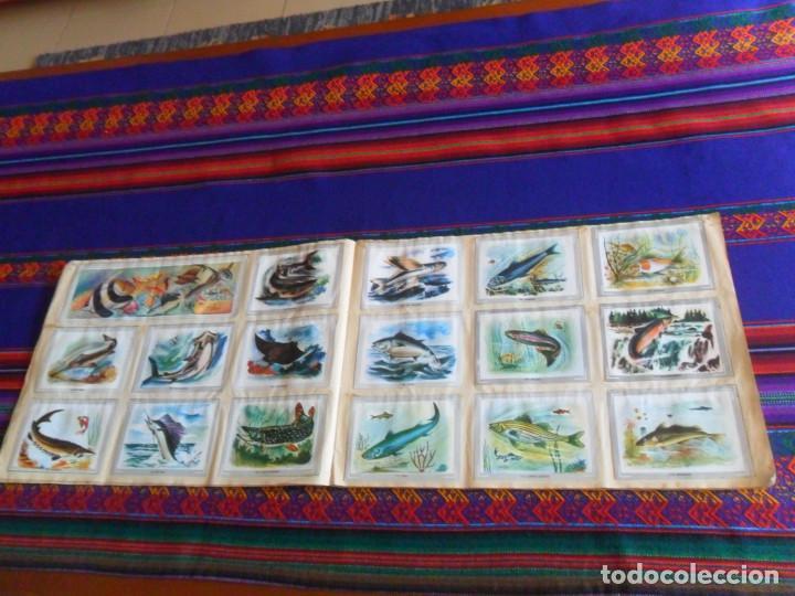 Coleccionismo Álbum: VIDA Y COLOR 1 COMPLETO 380 CROMOS. ÁLBUMES ESPAÑOLES 1965. - Foto 3 - 218719445