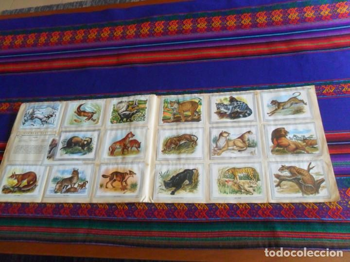 Coleccionismo Álbum: VIDA Y COLOR 1 COMPLETO 380 CROMOS. ÁLBUMES ESPAÑOLES 1965. - Foto 5 - 218719445