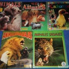 Coleccionismo Álbum: LOTE DE 5 ÁLBUMES - ANIMALES SALVAJES - MIS ANIMALES PREFERIDOS - ANIMALES DEL MUNDO - PANINI. Lote 57798142