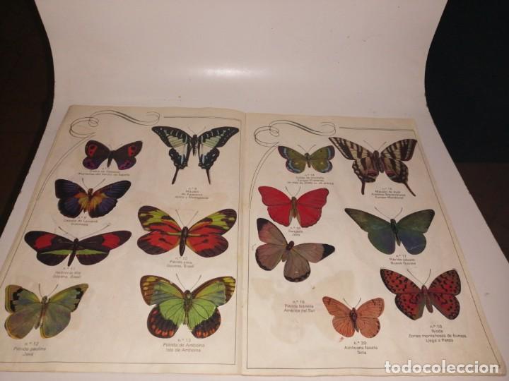 Coleccionismo Álbum: Las cien mariposas más bellas del mundo álbum panrico , completo ver fotos - Foto 4 - 221727193
