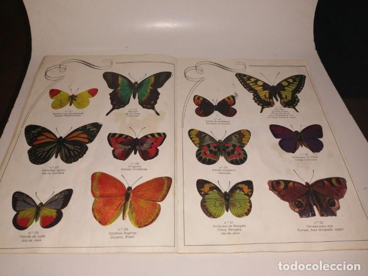 Coleccionismo Álbum: Las cien mariposas más bellas del mundo álbum panrico , completo ver fotos - Foto 5 - 221727193
